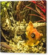 Small Fish In An Aquarium Canvas Print