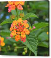 Small Flowers On A Tree Canvas Print