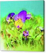 Small Group Of Violets Canvas Print