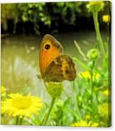 Small Heath Butterfly Canvas Print