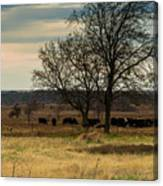 Small Herd In Winter Canvas Print