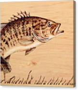 Small Mouth Bass Canvas Print