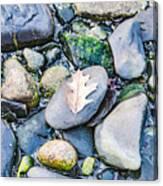 Small Rocks On The Beach Canvas Print