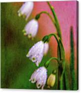 Small Signs Of Spring Canvas Print