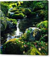 Small Stream In Green Forest Lapland Canvas Print