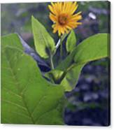 Small Yellow Flower And Green Big Leaves In The Sun Light. Canvas Print