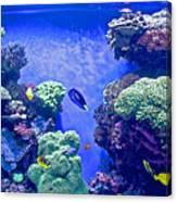 Smaller Fish In Monterey Aquarium-california  Canvas Print