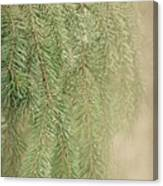 Smell The Pine Canvas Print
