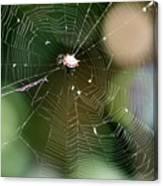 Smiley Spider Web  Canvas Print