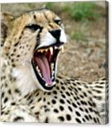 Smiling Cheetah Canvas Print