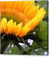 Smiling Flower Canvas Print