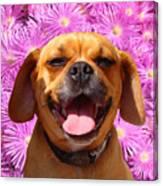 Smiling Pug Canvas Print
