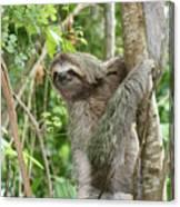 Smiling Sloth Canvas Print
