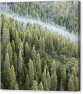 Smoke In Forest Canvas Print