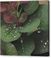Smoke Tree Drops Canvas Print