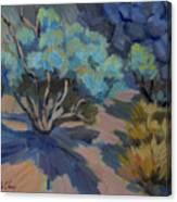 Smoke Tree In La Quinta Cove Canvas Print