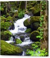 Smokey Mountain Stream Canvas Print