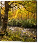 Smoky Autumn Canvas Print
