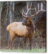 Smoky Mountain Elk II - North Carolina's Cataloochee Valley Wildlife Canvas Print