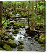 Smoky Mountain Stream 2 Canvas Print