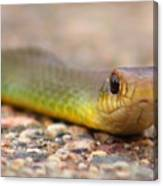 Smooth Green Snake ... Montana Art Photo Canvas Print