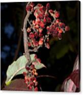 Smooth Sumac Flower Canvas Print