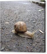Snail 2 Canvas Print