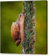 Snail Climbing The Tall Grass Canvas Print