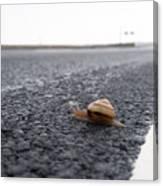 Snail Crossing... Canvas Print