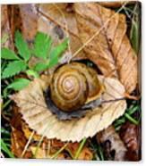 Snail Home Canvas Print