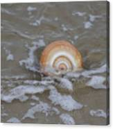 Snail In The Surf Canvas Print