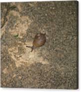 Snail On Sidewalk Canvas Print