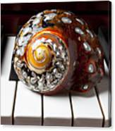 Snail Shell On Keys Canvas Print