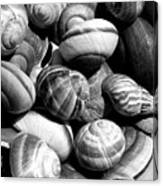 Snail Shells In Black And White Canvas Print