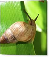 Snail Work B Canvas Print