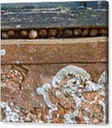 Snails At Home With Lichen Canvas Print