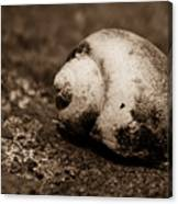 Snails Pace Canvas Print