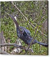 Snake Bird Canvas Print