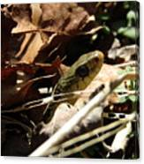 Snake In Nature Canvas Print