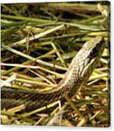 Snake In The Grass Canvas Print