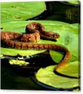 Snake Life Canvas Print