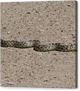 Snake On The Road Canvas Print