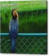 Snakebird Canvas Print
