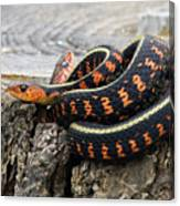 Snakes On A Stump Canvas Print