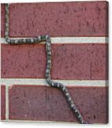 Snaking Up A Brick Wall Canvas Print