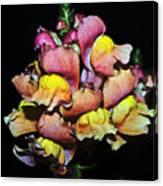 Snapdragons Canvas Print