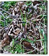 Snipe In Camouflage 2 Canvas Print