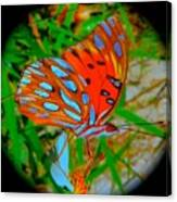 Snooty Butterfly Canvas Print