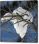 Snow And Africa Canvas Print