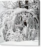 Snow Arch Canvas Print